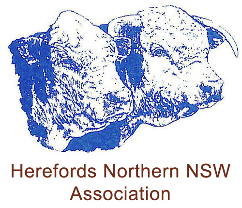 Herefords Northern NSW